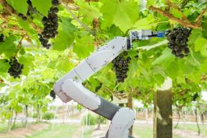 /wp-content/uploads/2019/06/robots-in-agriculture.jpg