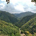 ՀԱԱՀ մասնագետները ջանքեր են գործադրում անտառվերականգնման ուղղությամբ